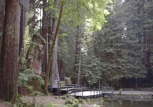 Bohemian Grove (Wikimedia/Aarkwilde)