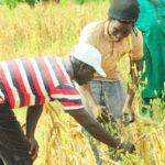 Farmers in Ghana