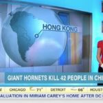 "Giant Hornets Kill 42 People in China""--which CNN thinks is in South America (screen grab: Daily Buzz)"